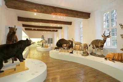 R ouverture du mus um d 39 histoire naturelle de troyes - Restaurant la table de francois troyes ...